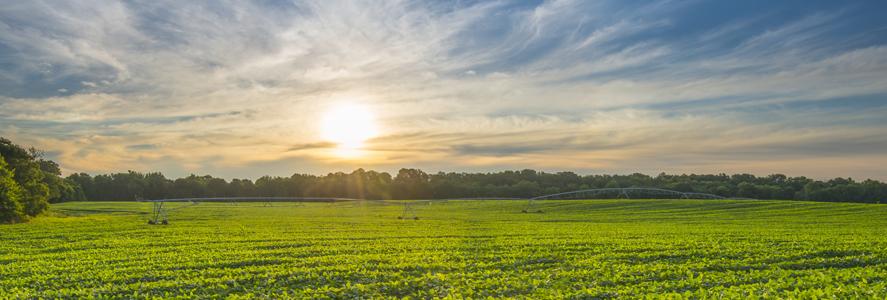 ZFS Zeeland Farm Services Inc