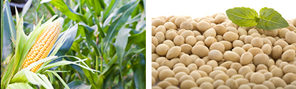 ZFS organic corn and soybean seed