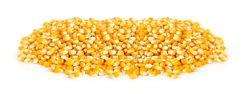 ZFS Organic Corn Seed